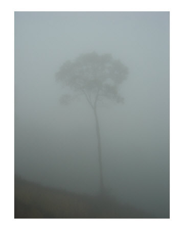 Fog-Photographic-Print-C12289663